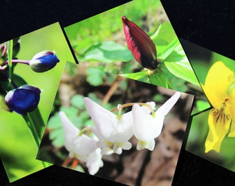 Flower photo magnet; Gifts for nature lovers; Gifts under 5; Gifts under 10; Nature and wildflower photography; Gifts for her