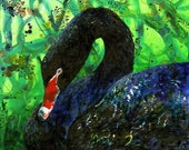 Black Swan - fine art print  - Australian bird art print - archival print - by Michelle Gilks