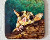 Sugar glider drink coasters - Australian animal - Australian possum coasters - by Michelle Gilks