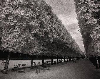 Luxembourg Garden Trees, Paris, France