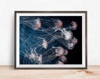 Sea Life Print, Sea Life Wall Art, Sea Life Decor, Sea Life Printable, Sea Life Art, Printable Wall Art - Instant Download