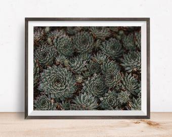 Succulent Print, Succulent Wall Art, Succulent Decor, Succulent Printable, Succulent Art, Printable Wall Art - Instant Download