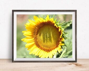Flower Print, Flower Wall Art, Flower Decor, Flower Printable, Flower Art, Printable Wall Art - Instant Download