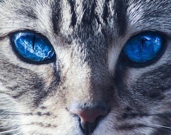 Captivating Blue Eyed Cat