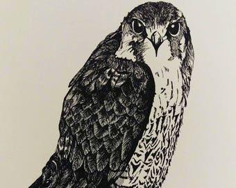 "Peregrine falcon bird of prey Giclee art print 8""x10"" from original artwork drawing by Ruth Dagger."