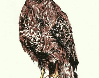"Buzzard bird of prey colour Giclee art print from pen and ink original artwork by Ruth Dagger in 8""x10""."