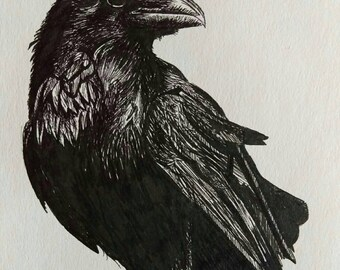 """Raven, bird of prey Giclee art print from original black and white pen and ink artwork by Ruth Dagger in 8""""x10"""""""