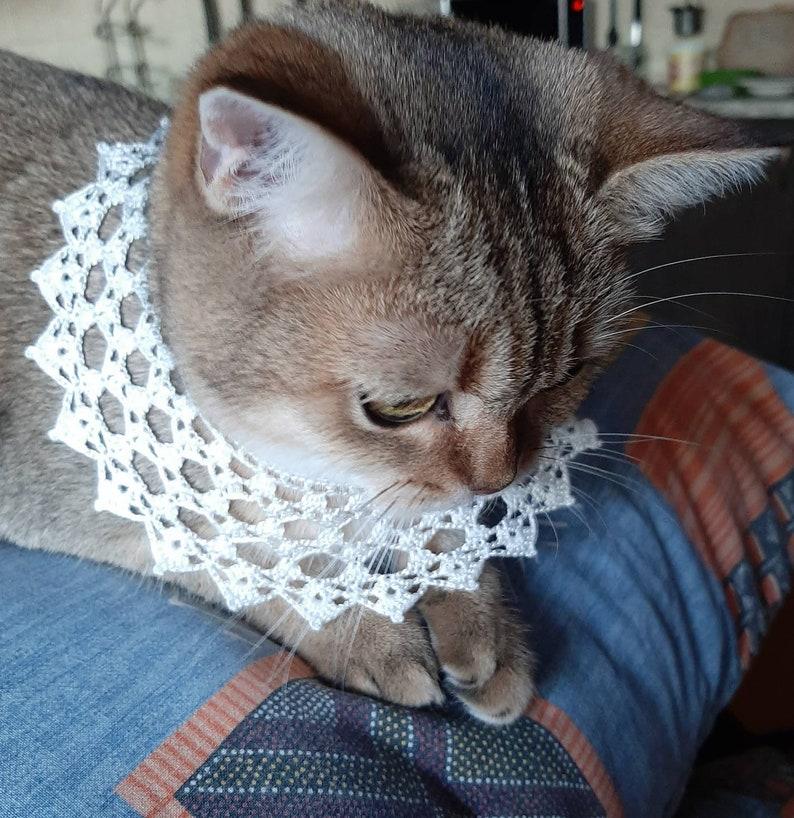 Cats collar crochet Rbg style Pet accessories Cats photo prop