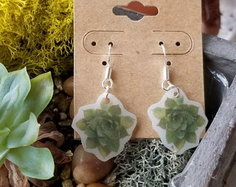 Succulent photo Earrings- Lightweight with sterling silver hooks