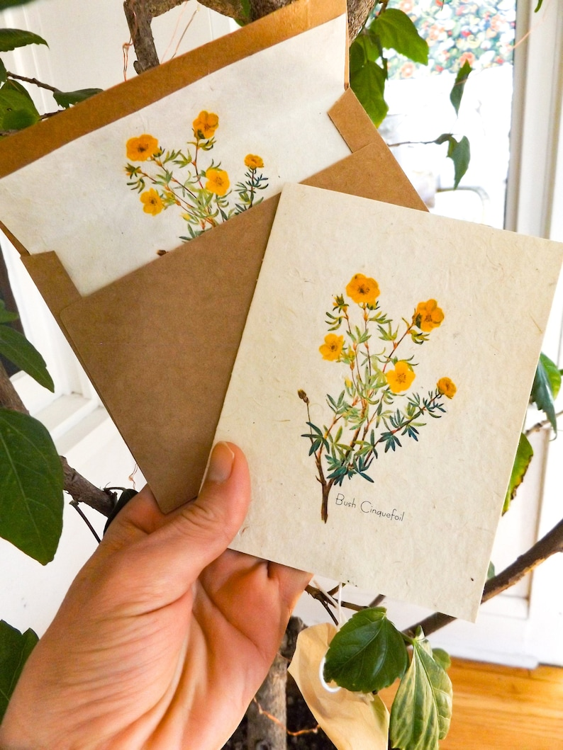 Seed Paper Cards  6 pack With Envelopes Lined With Seed Paper image 0