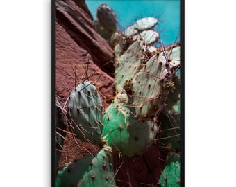 """dripping Cactus"""" Photograph By LC Framed paper poster"""