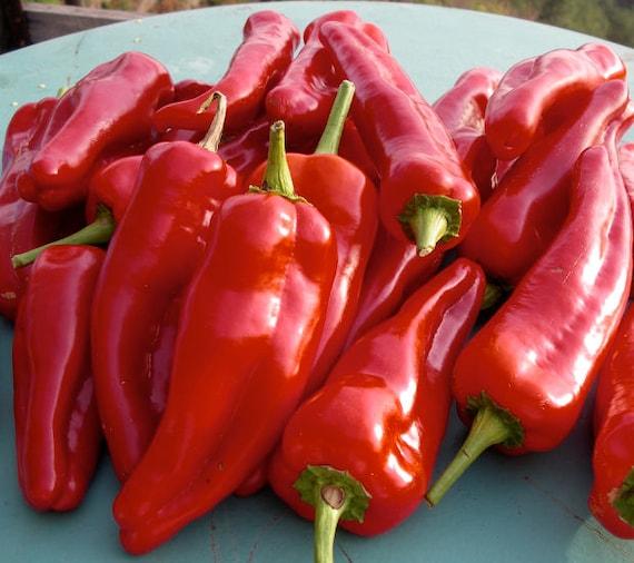 Zambia Hot Pepper Organic Non-GMO 36 Seeds