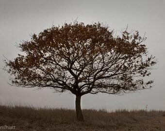 Lone Tree - Autumn