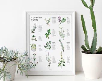 Herbs Art Print, wall art, wall decor, kitchen decor, kitchen art, home decor, watercolor painting, botanical print, infographic, herb print