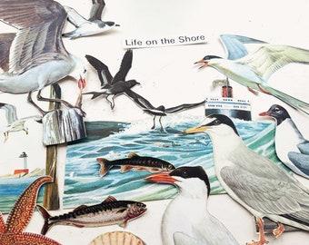 Sea Birds Cotton Fabric Seas the Day Seagull Duck Gull Red Dear Stella FQ//Metre