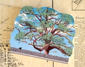 600 Year Old Oak Tree of Basking Ridge Keepsake - LIMITED RUN