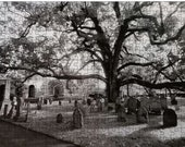 Collectors Puzzle - 286 Piece Color Puzzle and Box - Basking Ridge Oak Tree and Graveyard