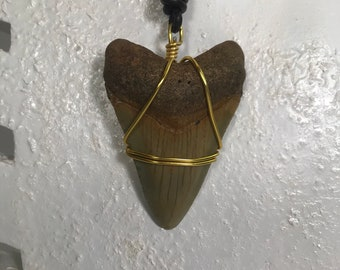 Gorgeous Fossilized Megalodon Shark Tooth Necklace CC:5