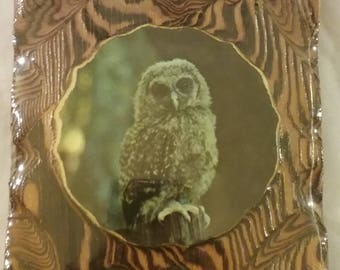 Wooden wall Owl plaque, Owl Picture,Barred Owl wood plaque, Wall art, wooden wall art, Vintage wood plaque, owl art, carved wood owl,