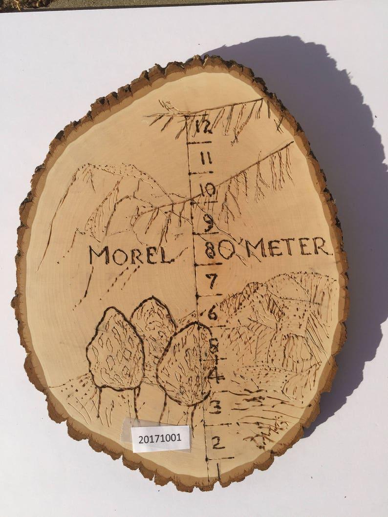 Size Matters Morel  O'Meter wall hanging art depicting a image 0