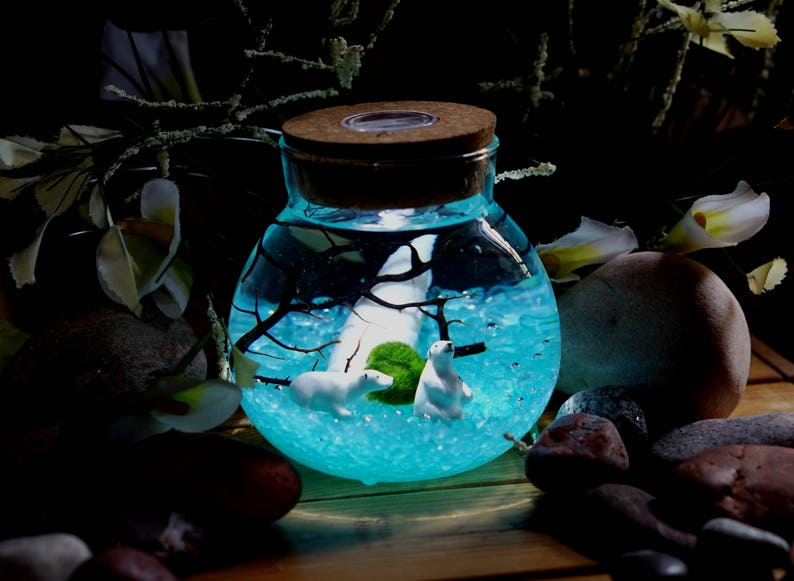 Marimo Moss Ball Miniature Terrarium Orb Aquarium Polar Bears Etsy