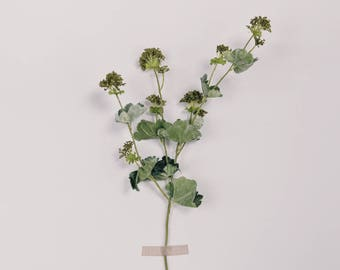 Artificial Lady's Mantle Green