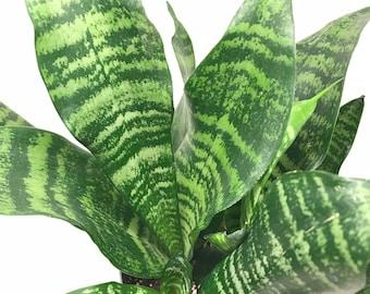 Passionfor Succulents