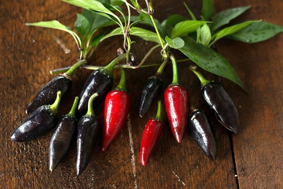 ORGANIC VEGETABLE  HOT CHILLI PEPPER BLACK HUNGARIAN  30 SEEDS
