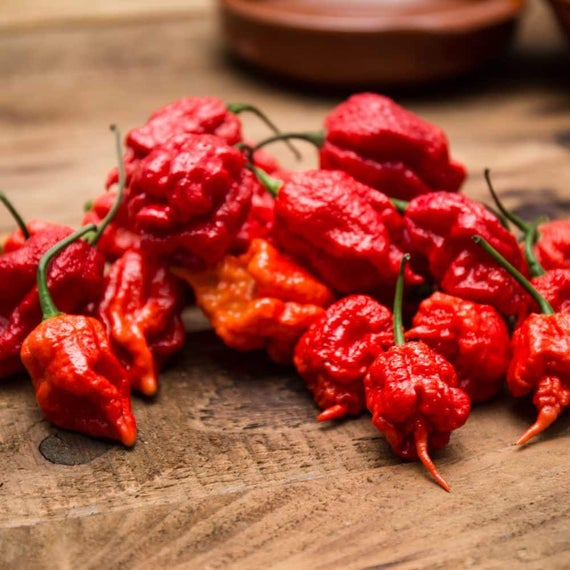 Chili pepper Basta Capsicum chinense 150.000-300.000 scoville 5 seeds