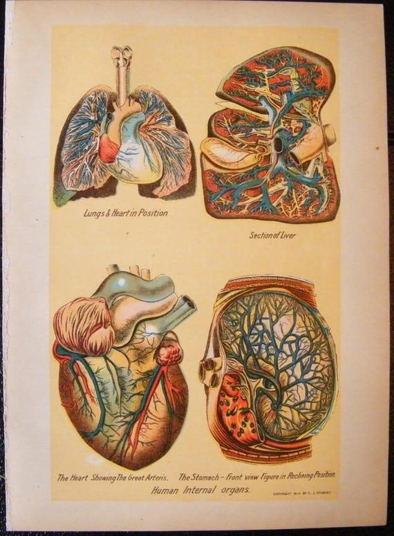 Vintage medical illustration chart human internal organs heart etsy image 0 ccuart Gallery