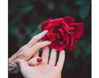 Delicate Rose and Hands