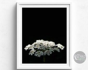 Flower Photography, Botanical Wall Art Print, Flower Decor, Modern Home, Printable Art, Flower Photo Print, Bedroom Wall Art Print