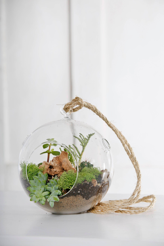 Hanging Terrarium Glass Vase With Succulents Cactus Etsy