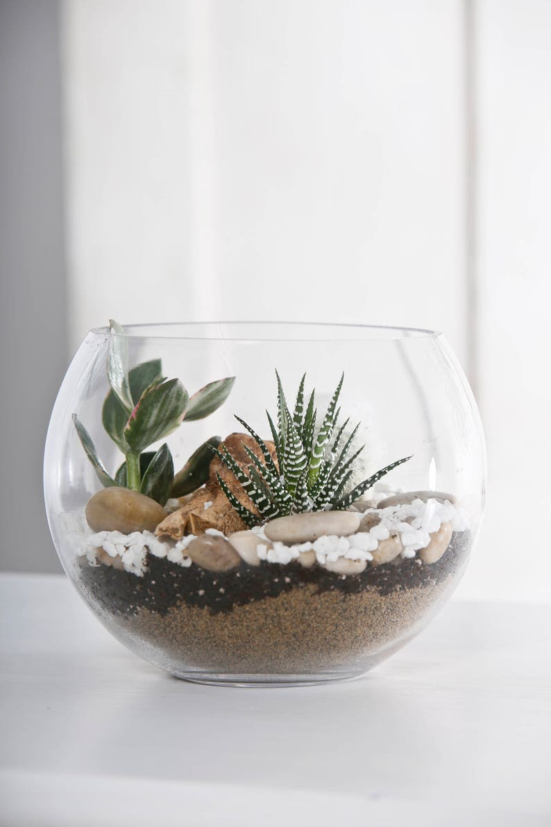 Terrarium In Glass Ball Terrarium Glass Vase In The Shape Of Etsy