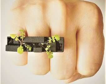 Bill plant ring, comes with compost and organic seeds