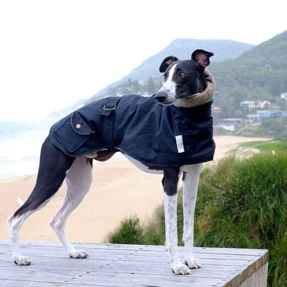 Italian Greyhound Whippet et lévrier Whippet Greyhound manteaux 4eb9d3