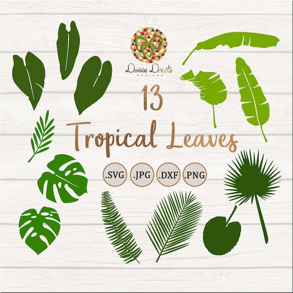 Tropical Leaves Svg Jungle Leaf Clipart Monstera Leaf Palm Etsy