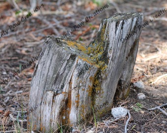Mossy Tree Stump Photograph