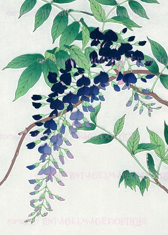 Antique  19th Century Japanese Botanical Illustration Of Anemone Flowers  5x7 Greeting Card