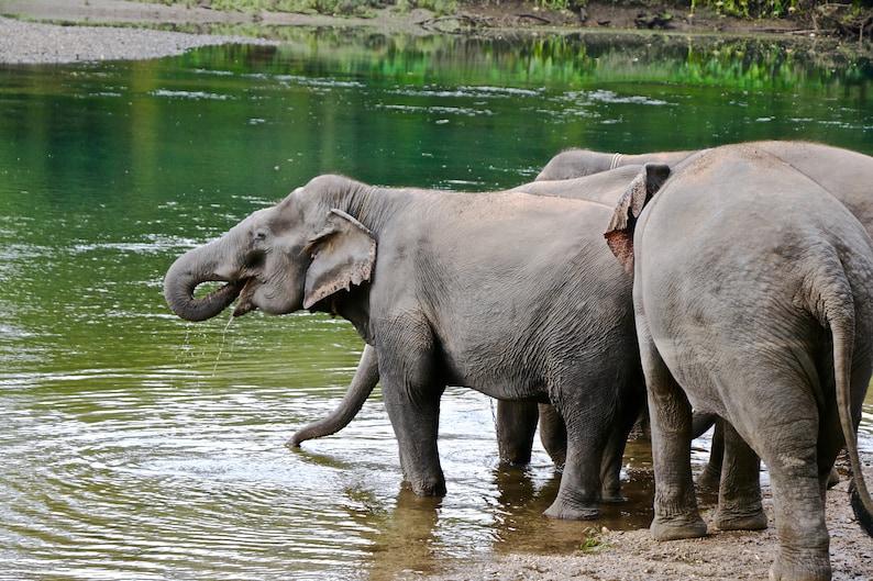 ElephantDrinking image 0