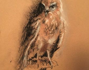 Hawk picture, original hawk print, art, bird of prey, gift, sketch