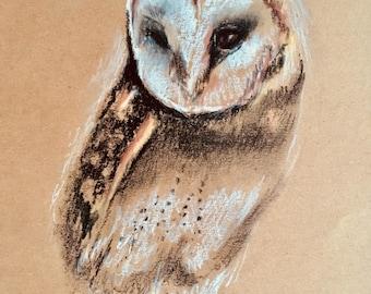 Barn Owl, original,bird, owl,bird of prey,wildlife