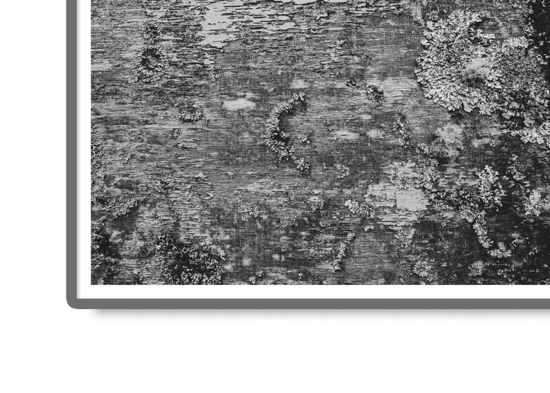 Coastal Decor Nautical Wall Art Old Wooden Boat Covered in Moss and Lichen Nature Photography Digital Download Black and White Photo