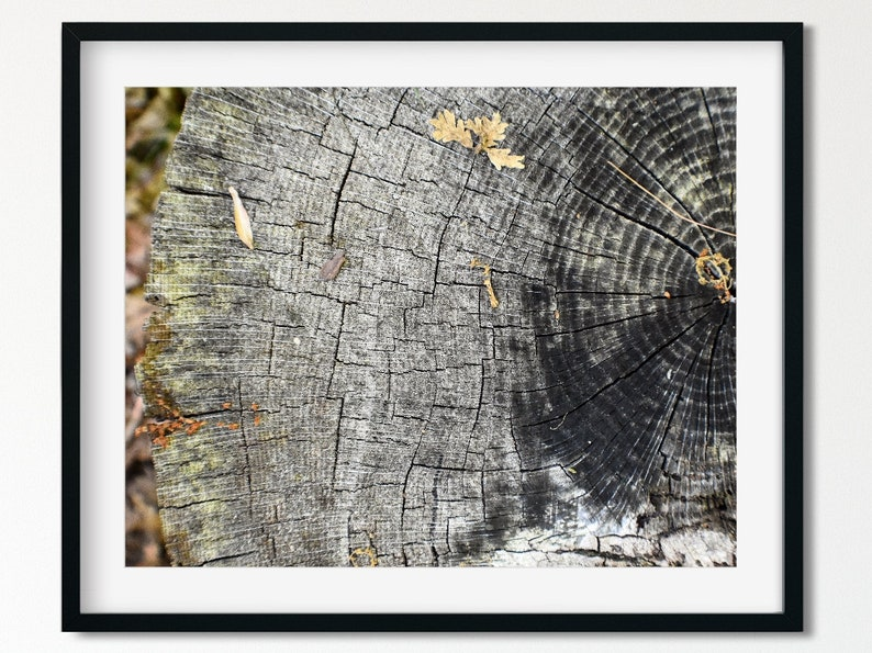 Etsy Tree Rings Print