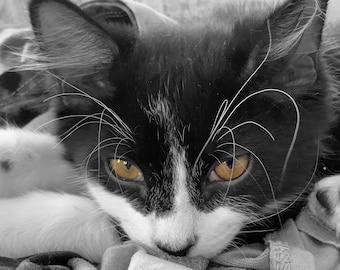 Cat Eye Color Splash - Digital photography download