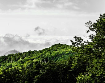 The Trees of the Smoky Mountains