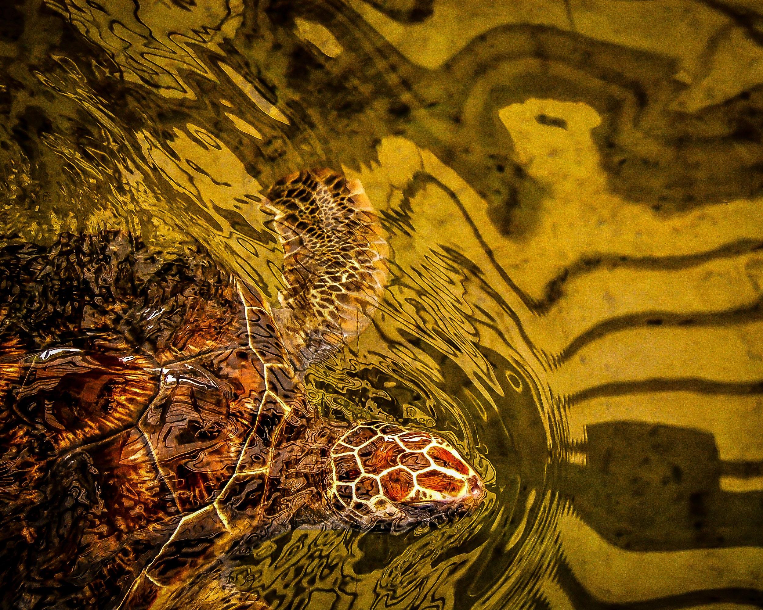 Green Sea Turtle Mexico Ocean Hawaii 8x10 Aluminum Metal | Etsy