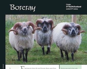 Deborah Robson's Guide to Fiber: Boreray (PDF download)