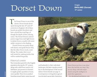 Deborah Robson's Guide to Fiber: Dorset Down (PDF download)