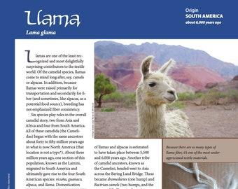 Deborah Robson's Guide to Fiber: Llama (PDF download)